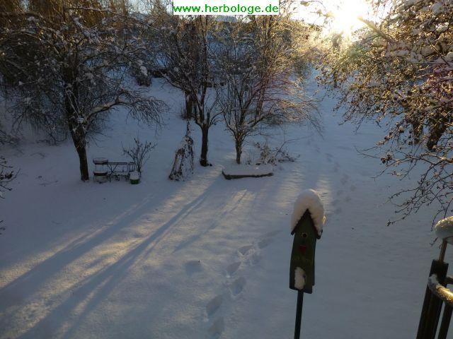 2017-1-11-winter-schnee