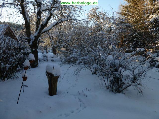 2017-1-11-winter