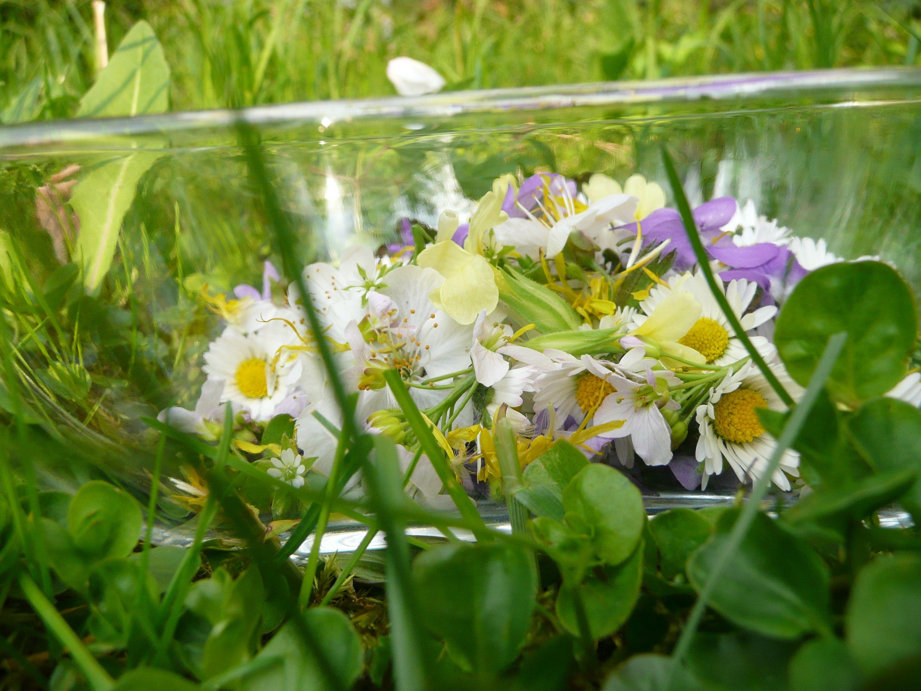 2017.3.20 Blütensalat